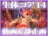 「生体コア 14」動画 & 静止画 パック